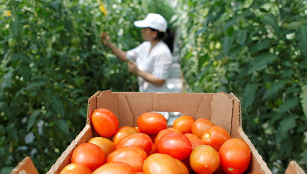 В Украине дорожают огурцы и помидоры