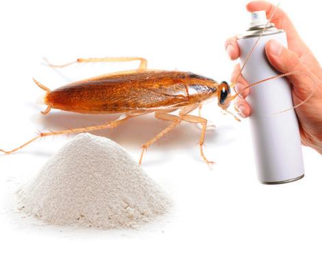 Индивидуальный подход и выбор средства от тараканов