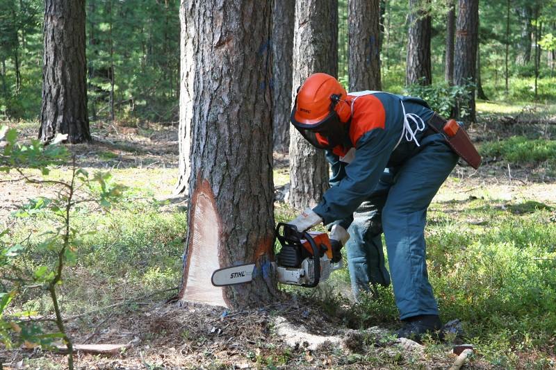 Как легко вырвать дерево с корнем