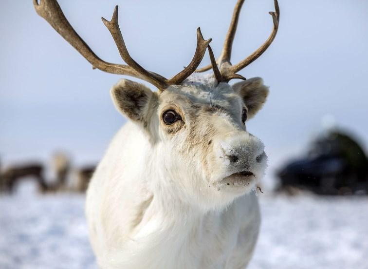 В Норвегии засняли редкое животное