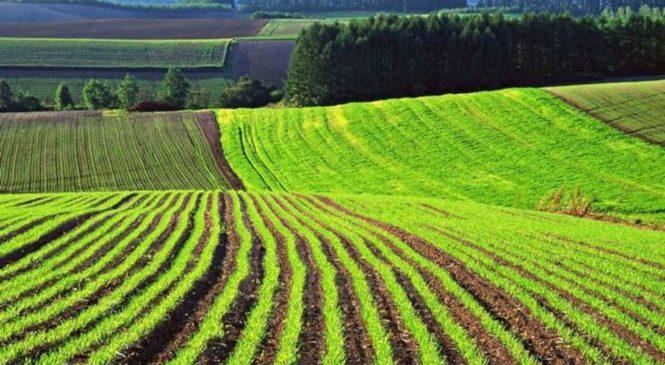Рынок земли в Украине: Милованов назвал главное требование партнеров